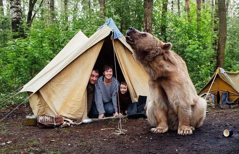 Kamp Alanında Hayvanlardan Korunma