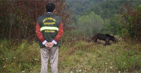 Avcılık ve Yaban Hayatı Bölümü Hakkında